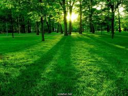 Best Nature Wallpaper Website Pictures 5 HD Wallpapers