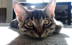 Big cat eyes