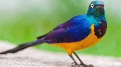 Birds - Photo #02