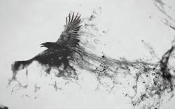 Abstract Smoke Flying Bird Art Photos 5275