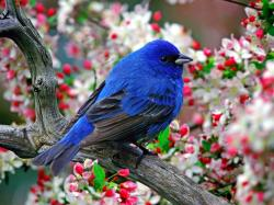 Blue Bird Wallpaper