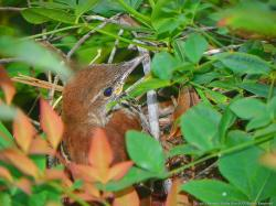 Bird in a Bush, by Beverly Hicks Burch