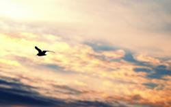 Bird Flying Silhouette Gull Freedom Sky