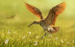 Bird Grass Nature Art