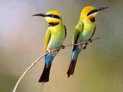 Nature And Birds Wallpaper Widescreen 2 HD Wallpapers