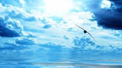 Bird over Ocean Wallpaper in 1920x1080 HD Resolutions