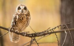 Bird Owl Branch