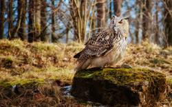 Bird Owl Mouse Stone