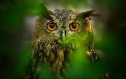 Leaves Nature Owl Bird