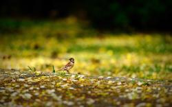 Bird Sparrow Nature
