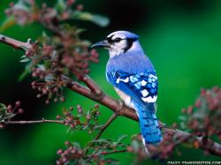Cool Blue Bird Wallpaper