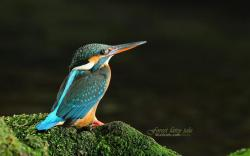 bird-wallpaper-03.jpg ...