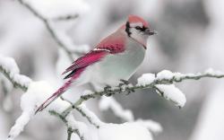 Bird; Bird; Bird Backgrounds ...