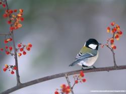 wallcoocom bird wallpaper vol