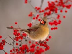 Animal: Birds Free Desktop, birds of prey pictures, animal .