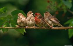 bird wallpaper 20 Amazing Pictures