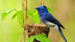 Beautiful Bird Wallpaper HD Free Download
