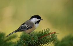 Bird Wallpapers 13659