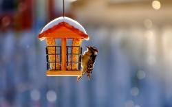 Birdhouse Bird Winter Snow Nature