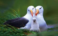 birds_family-1920x1200