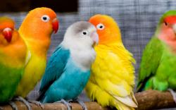 ... Pictures of Birds ...