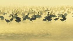 Birds Flamingos South Africa River