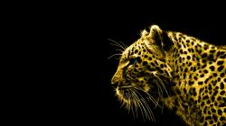 ... black-and-gold-hd-wallpapers ...