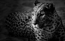 Black & White Background 32