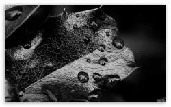 DOWNLOAD: leaf-macro-black-and-white free picture 2560 x 1600