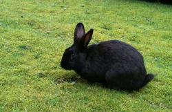 Black Rabbit at work! How cute is that!!!!! No carrot today bunny - but stick around tomorrow!