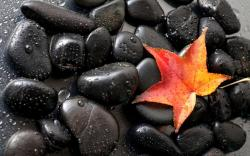 Black stones leaf