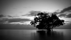 Black And White Nature Photography Widescreen 2 HD Wallpapers