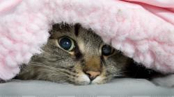 Cat Under The Blanket HD Desktop Background wallpaper