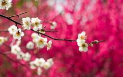 Bloom Flowers White Branches Spring Nature