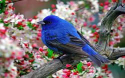 Free Blue Bird Wallpaper 39977 1600x1000 px