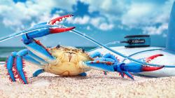 Blue Crab Beach Sand