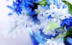Flowers White & Blue Flowers