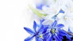 beautiful Blue flower high definition wallpaper