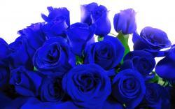 ... Blue Rose 07 ...