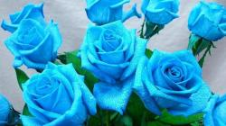 Wallpaper Tags: delicate lovely roses harmony nice beautiful flowers bouquet blue pretty