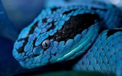 Blue Snakes 2560x1600