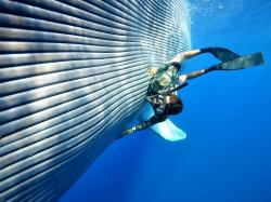 picturePetting a blue whale.