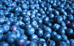 View And Download Blueberry HD Wallpapers ...