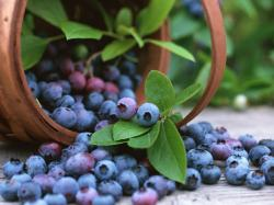 Annual Florida Blueberry Festival