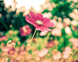 The park red flowers blur photography wallpaper 1280x1024.