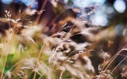 Blurred summer grass