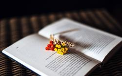 Book Pages Text Berries Flowers