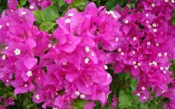 bougainvillea dried flower arrangements