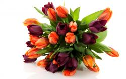 Bouquet Of Flowers Pictures