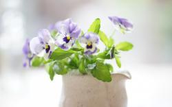 Bouquet Pansies Flowers